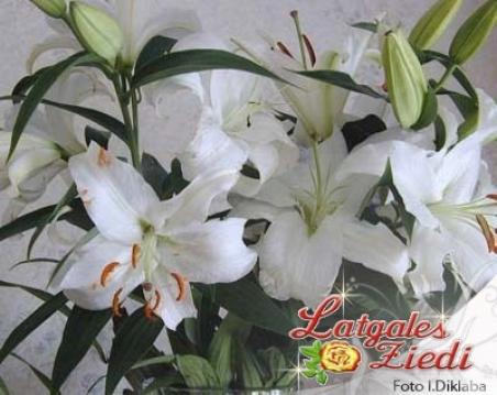 """Ziedi - Lilija """"Balta lilija"""""""