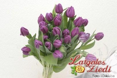Tulpes 005