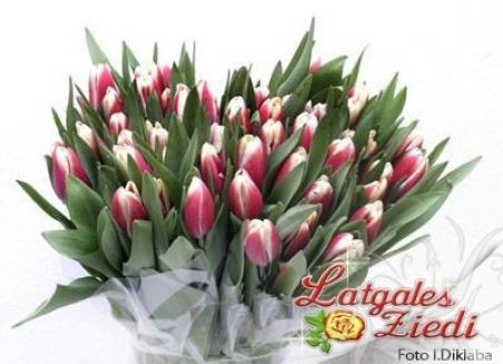 Tulpes 002