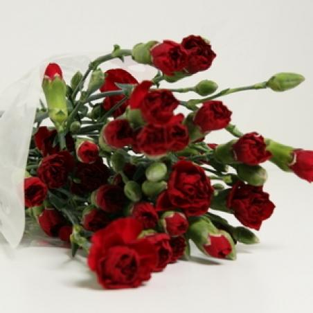 Цветы кустовая гвоздика букеты купить доставка цветов в кургаге